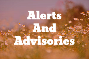 allergy asthma alerts and advisories